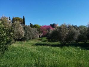 castello di saturnia